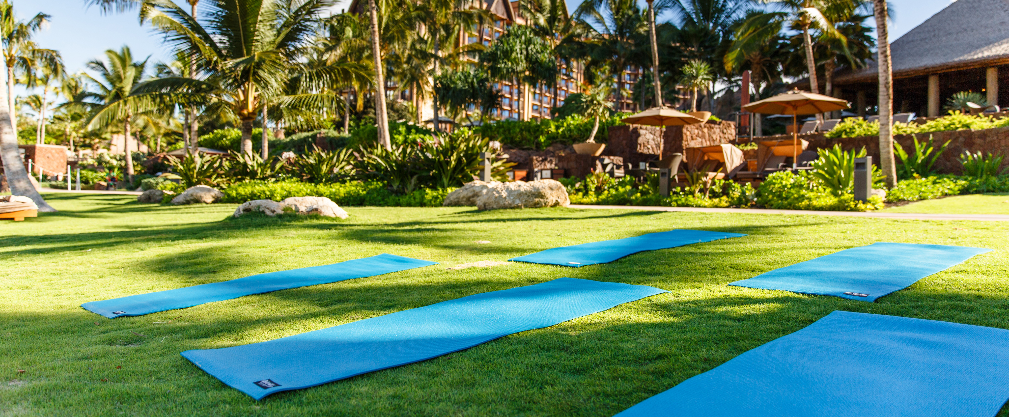 Several yoga mats spread out on a lawn bordered by palm trees