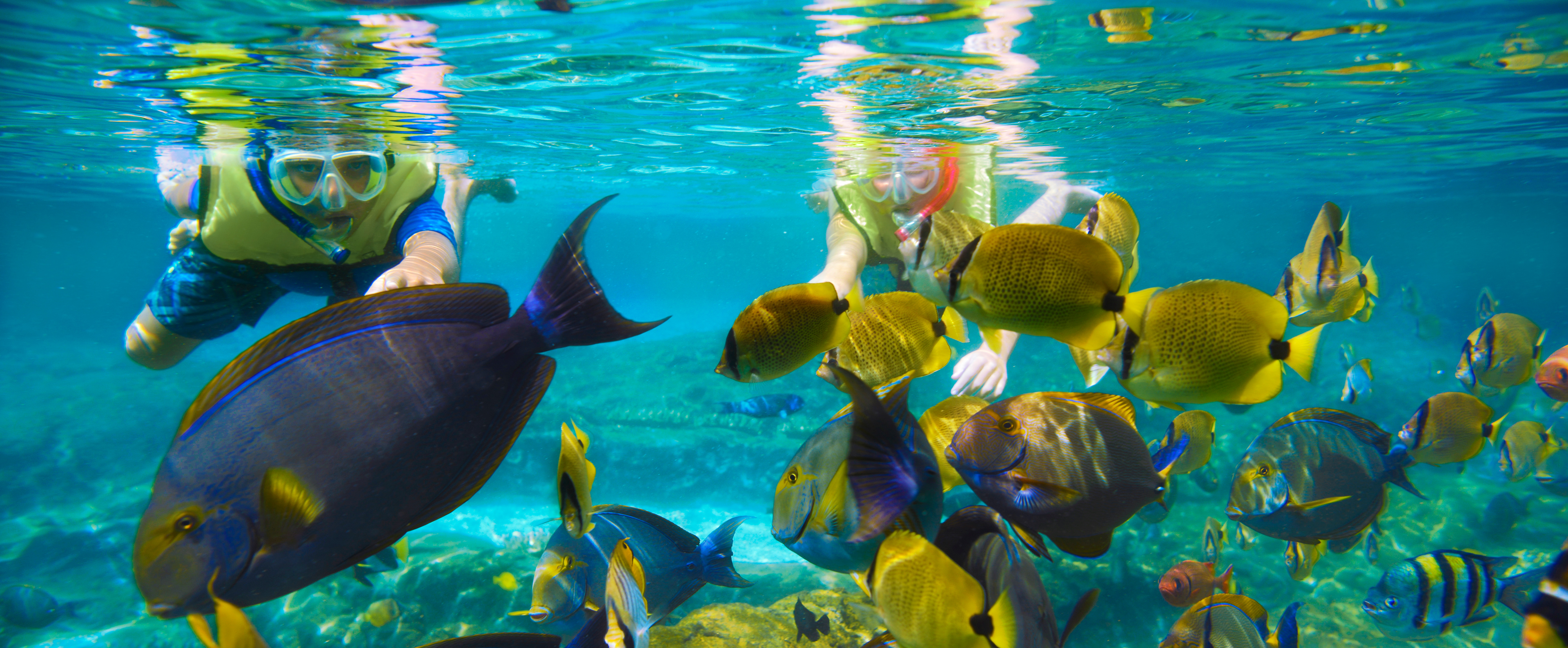 Young Guests swim toward a school of tropical fish while snorkeling in the waters of Rainbow Reef