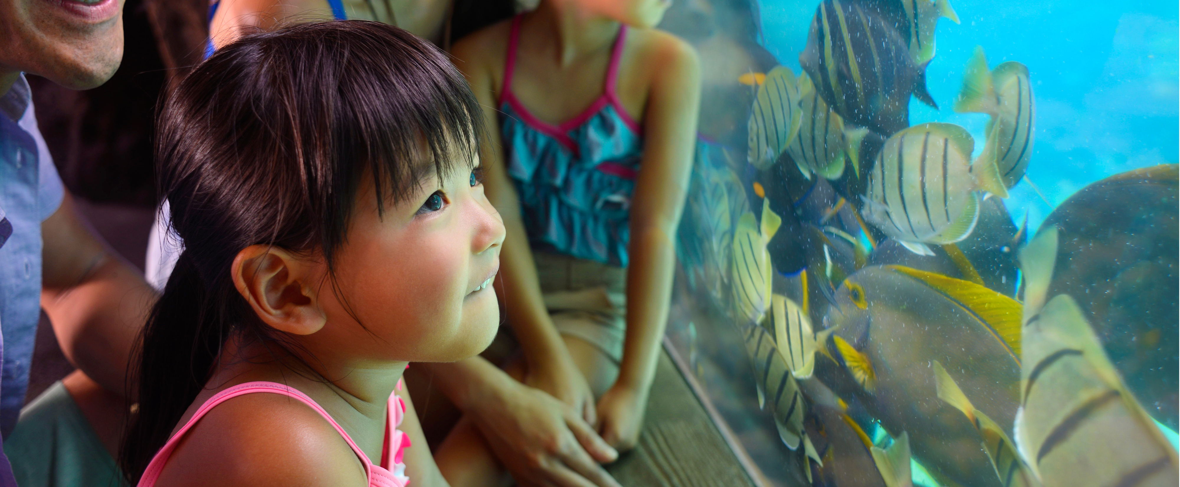 A young girl gazing in wonder toward tropical fish from behind transparent aquarium glass